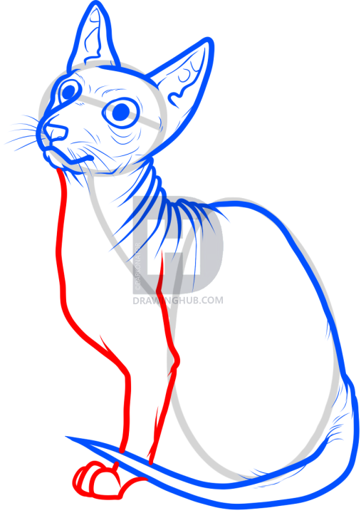 507x720 How To Draw A Sphynx Cat, Step