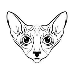 240x240 Sphynx Photos, Royalty Free Images, Graphics, Vectors Videos