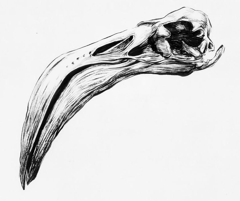 840x703 Flamingo Drawing Skull For Free Download
