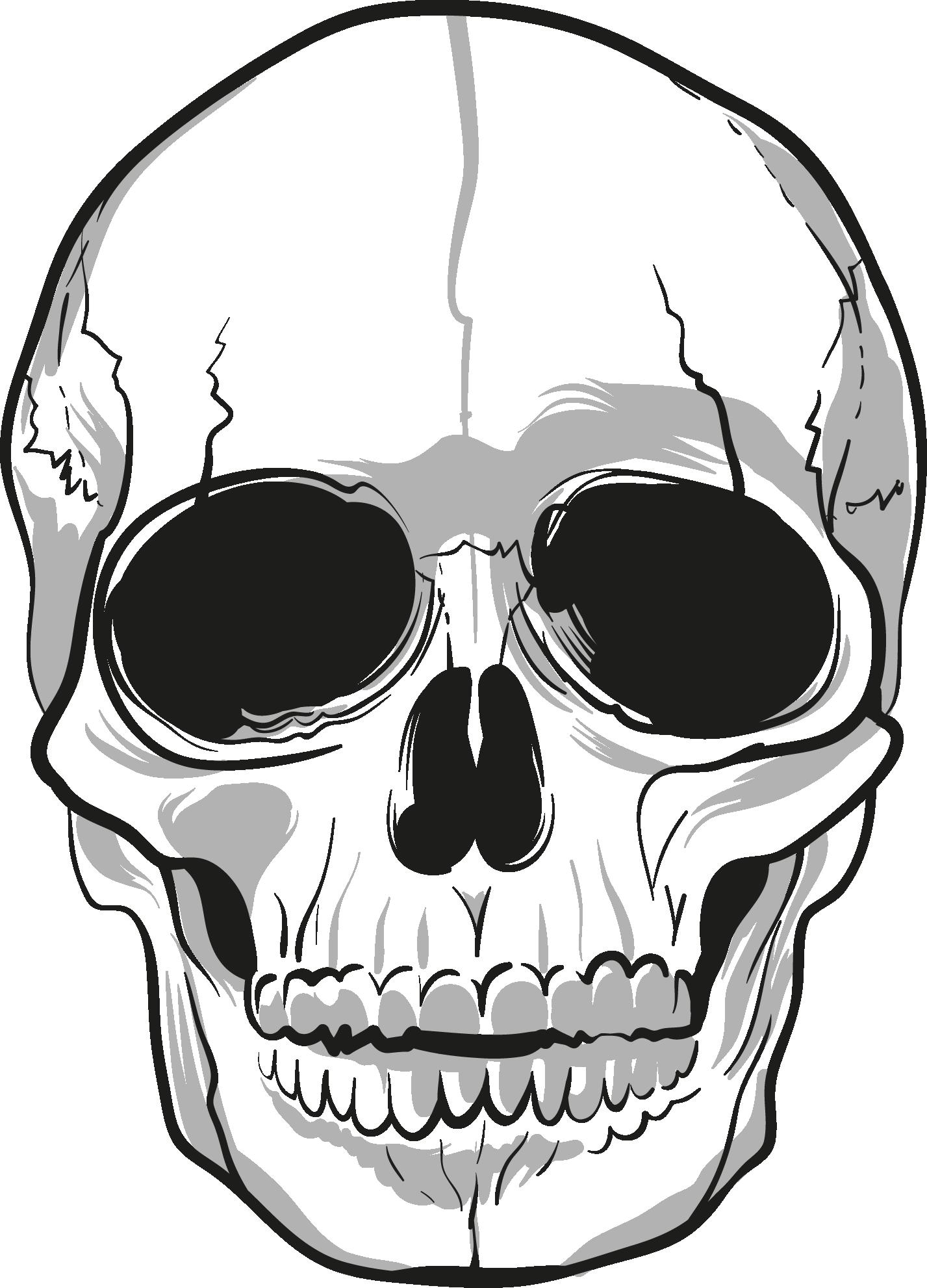 1427x1982 Clipart Skull, Human Skull, Clip Art