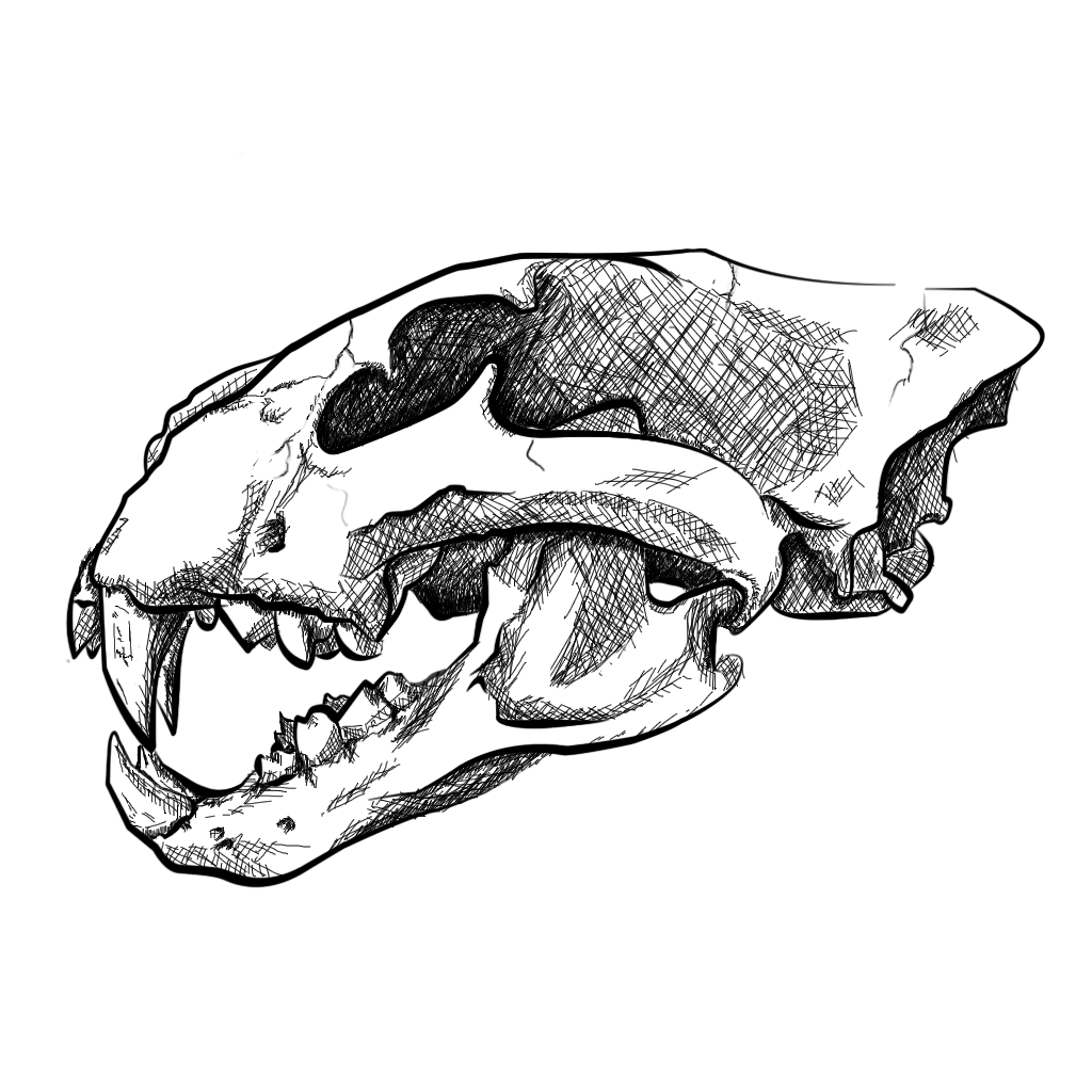 1024x1024 Skull Drawing Lion For Free Download