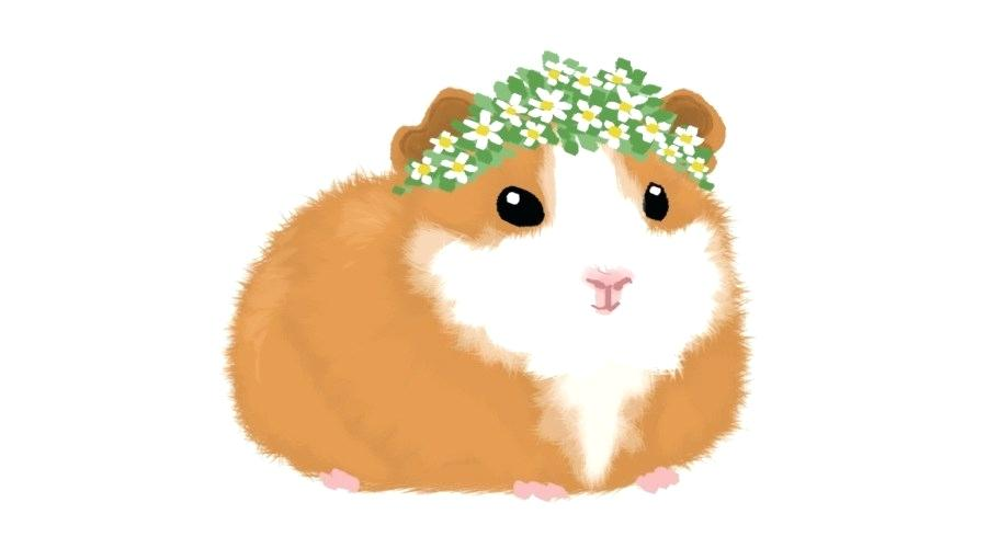 900x500 hamsters and guinea pigs hamster guinea pig drawing pencil pig