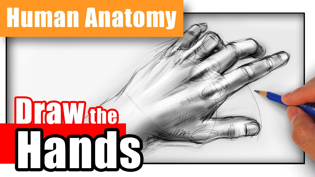 1280x720 How To Draw Hands From Any Angle
