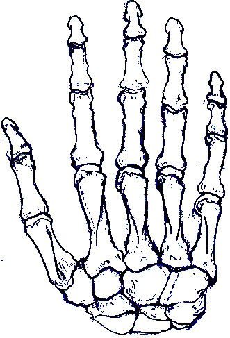 331x487 skeleton right hand howl o ween skeleton hands, skeleton, hands