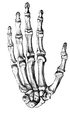 229x382 skeleton hand howl o ween skeleton, skeleton hands, skull
