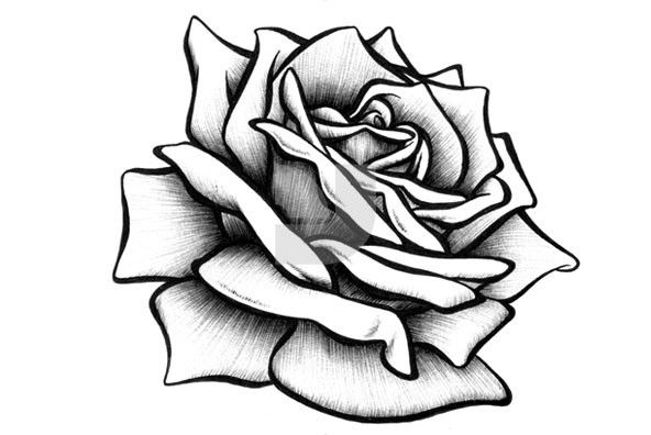 592x396 Hand Drawing Rose Diamonds Leer