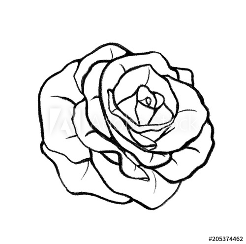500x495 Hand Drawn Rose Illustration Outline Drawing Sketch For Coloring