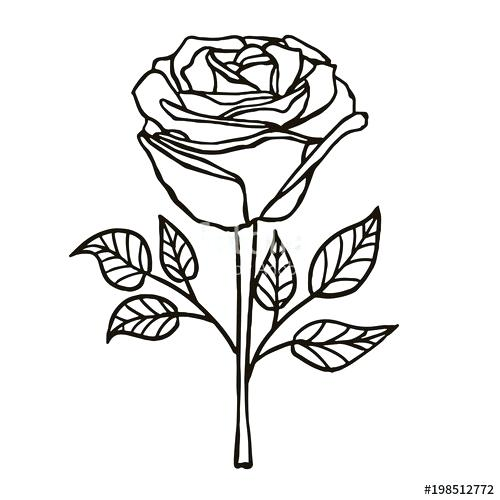 500x500 A Drawn Rose Drawn Flower Petals
