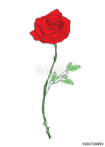 356x500 Deep Red, Ruby Rose Flower With Green Leaves, Sketch Style Vector