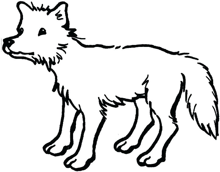 900x704 animals drawing outline outline draw animals drawing animals