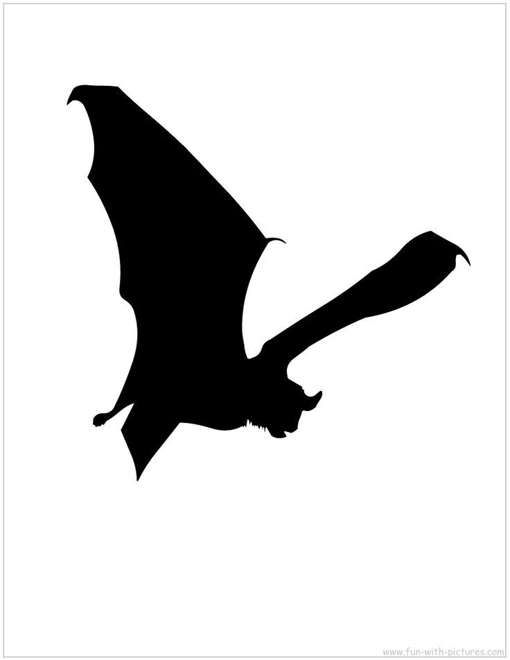 736x952 Collection Of Free Bat Clipart Realistic Amusement Clipart