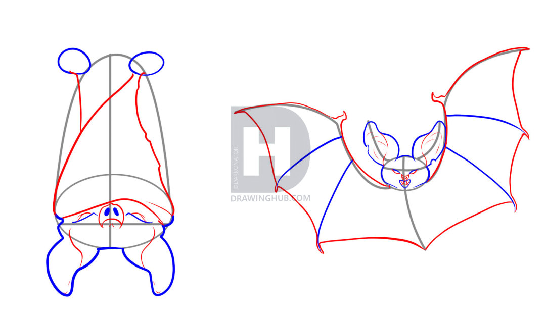 1080x632 How To Draw Bats, Step