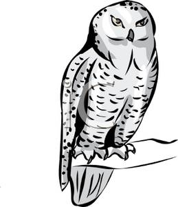259x300 Hedwig Owl Clipart