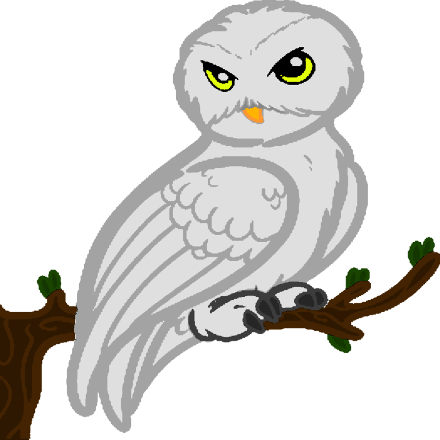 894x894 Collection Of Free Hedwig Drawing Realistic Download On Ui Ex