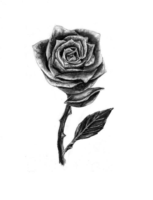 500x653 Harry Rose Tattoo Uploaded