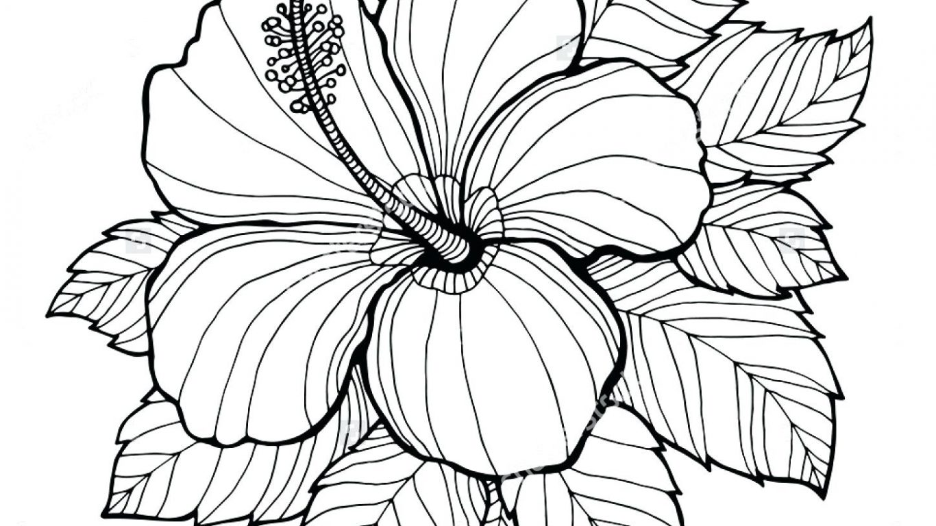 1366x768 Formidable Free Colorings Of Hawaiian Flowers New Flower Coloring