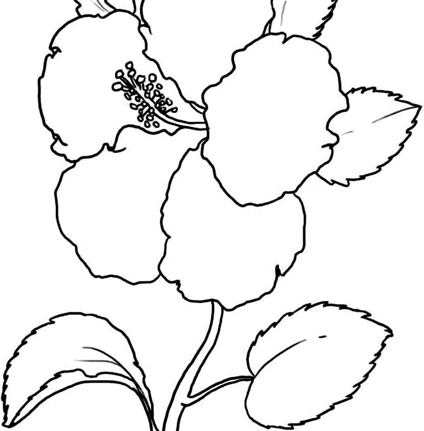850x864 Free Coloring Pages Of Hawaiian Flowers Formidable Printable