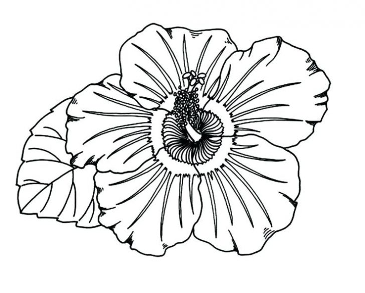 728x584 Hawaiian Coloring Pages Print Printable Hawaii For Adults Flowers