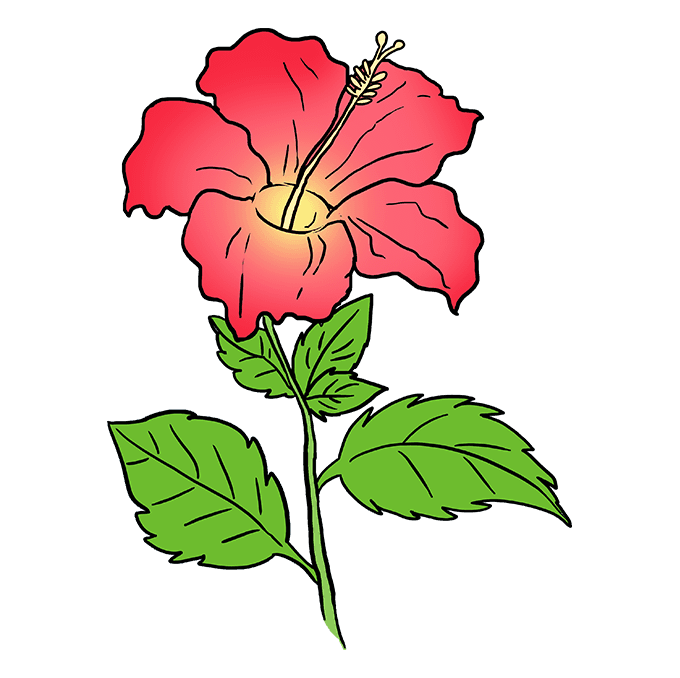 680x678 How To Draw A Hibiscus