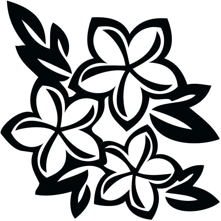 736x736 Hawaiian Flower Drawings