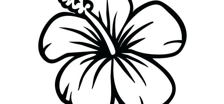 730x340 Hawaiian Flowers Drawing