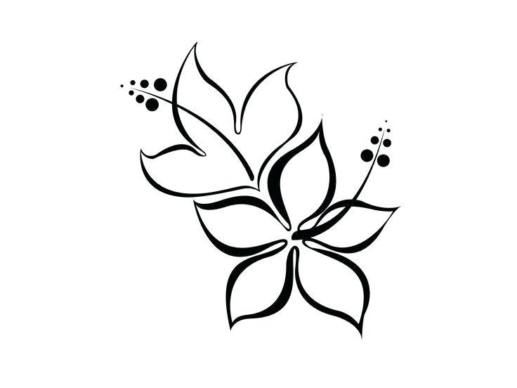 736x552 How To Draw A Hawaiian Flower Step