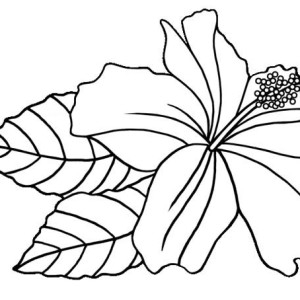 300x300 Coloring Pages Hawaiian Flowers Fun Time
