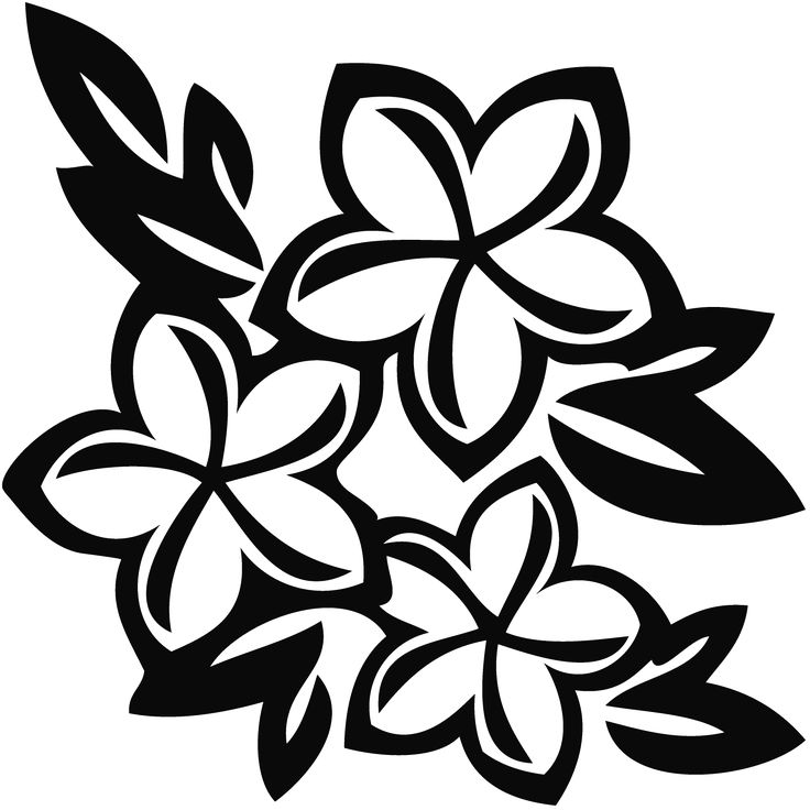 736x736 Plumeria Drawing Flower Samoan For Free Download