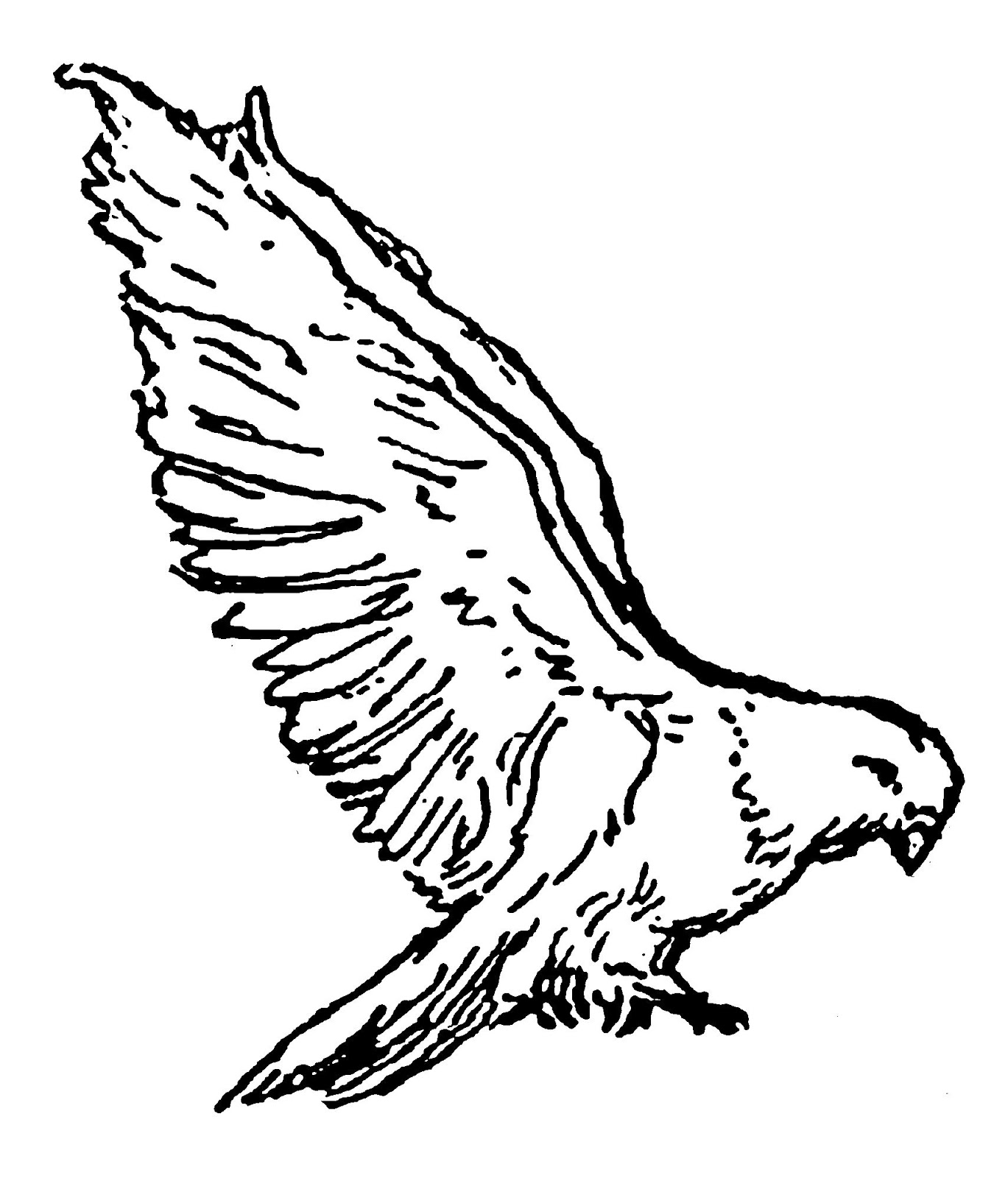 Hawk Feather Drawing