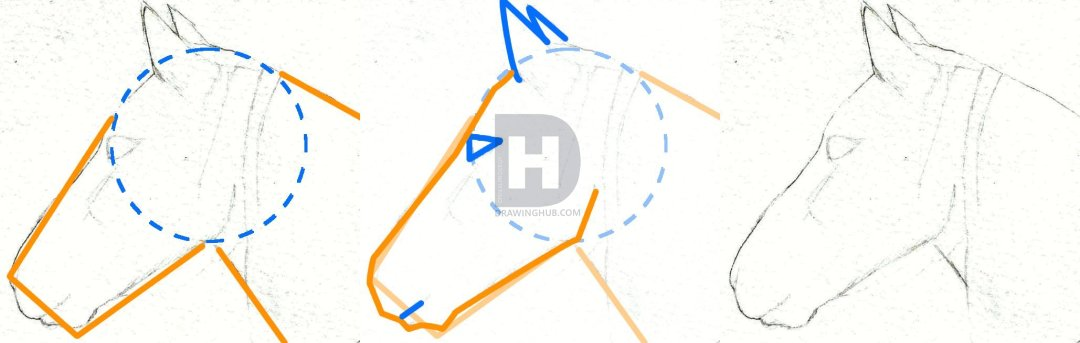 1080x343 How To Draw A Horse Head, Step