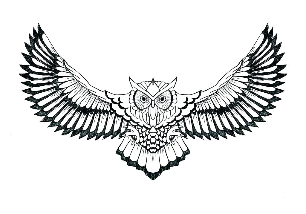 1024x716 Owl Outline Drawing How To Draw An Owl Head Owl Face Outline