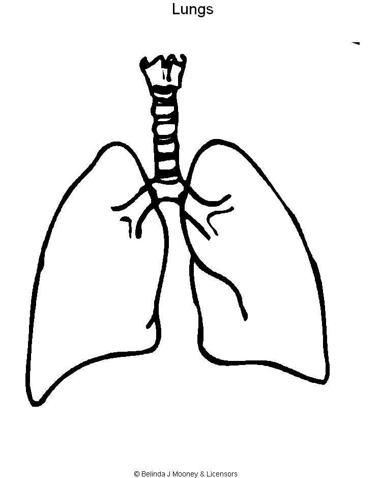 Heart And Lungs Drawing