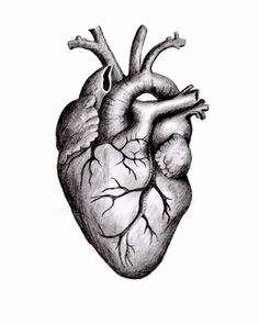 236x295 anatomical heart diagram elegant anatomical heart anatomy medical