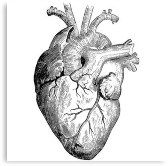 550x545 Huge Collection Of 'pictures Of Heart Drawing' Download More Than