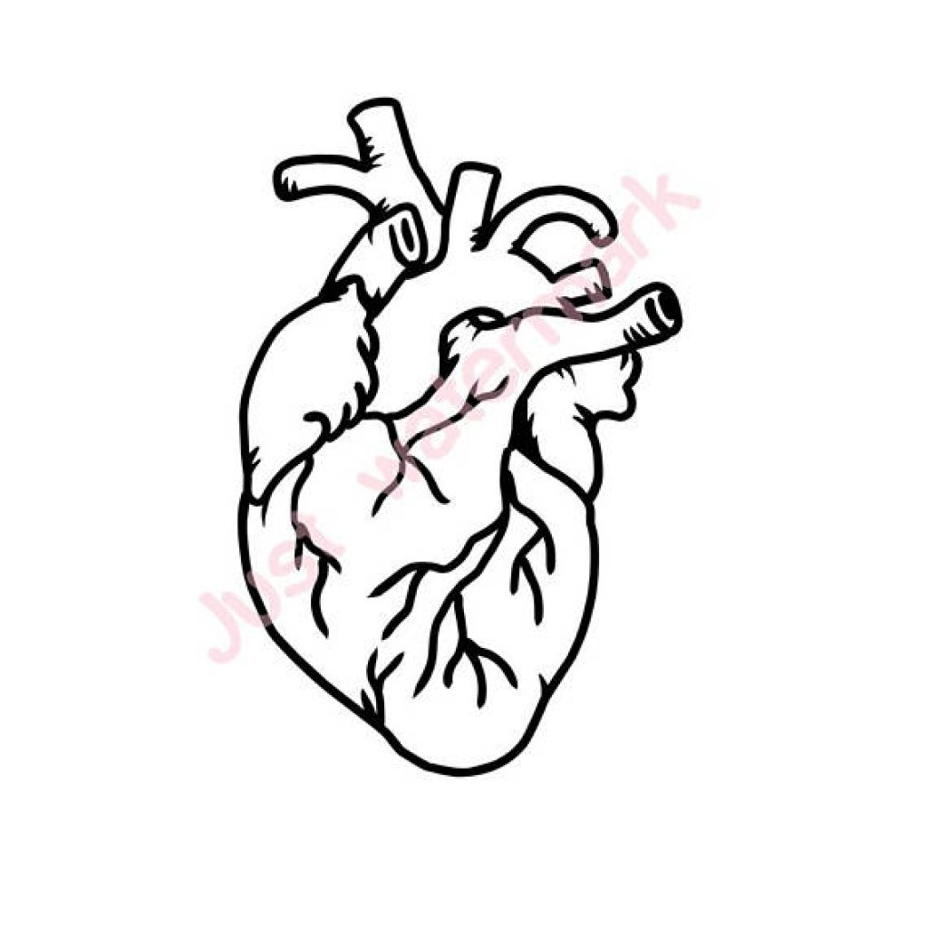 1024x1024 Real Heart Drawing Bird Clipart House Clipart Online Download