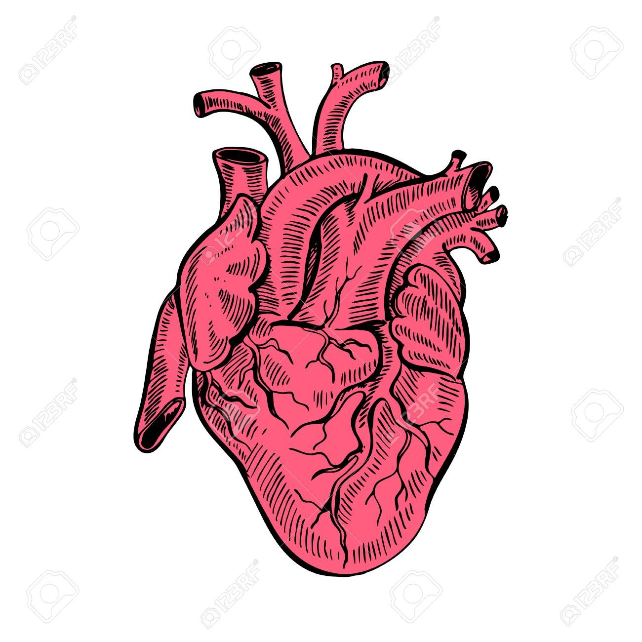 1300x1300 Hand Drawing Sketch Anatomical Heart Cartoon Style Vector