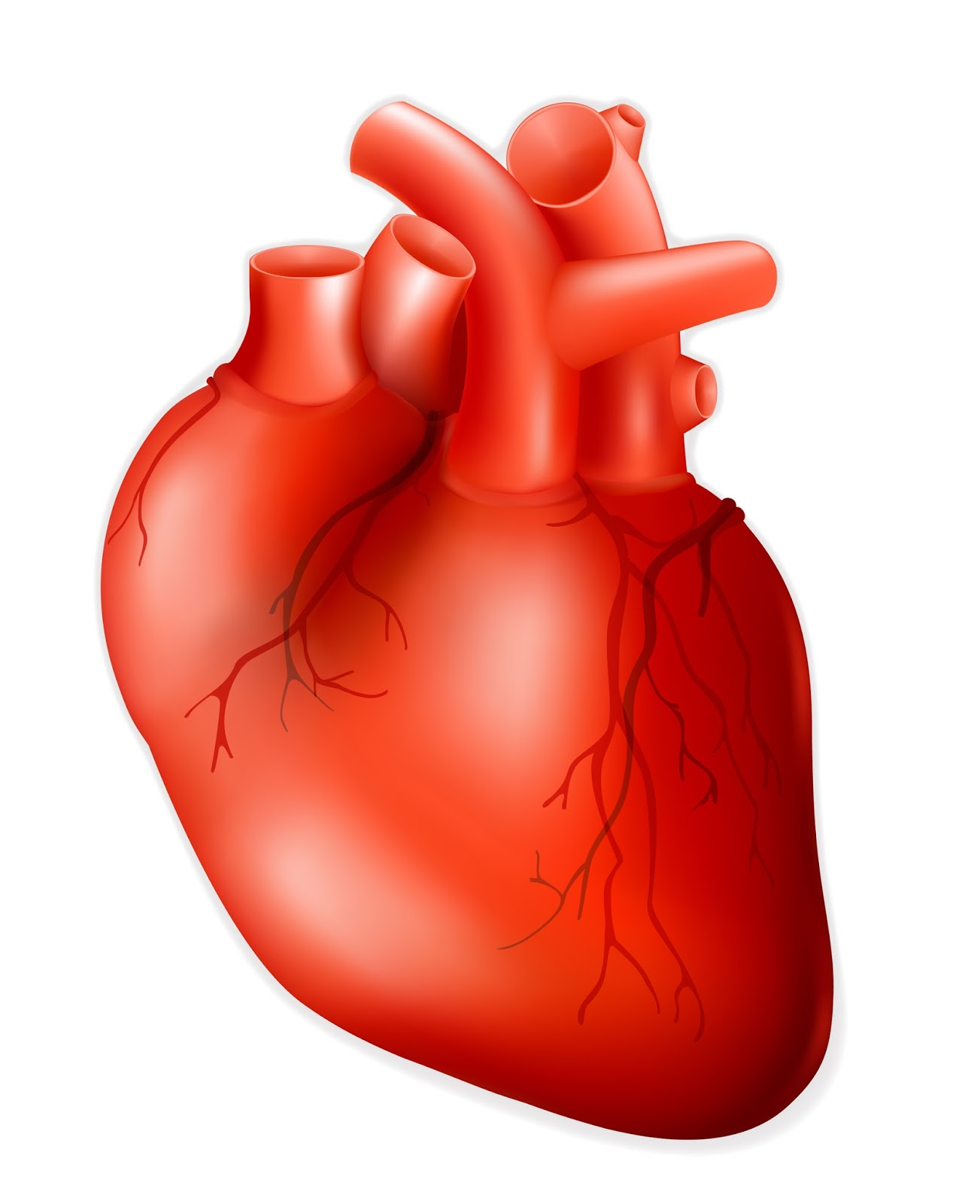 Heart Drawing Real