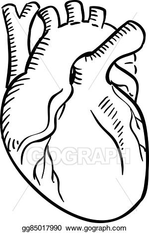 300x470 Huge Collection Of 'anatomical Heart Drawing Outline' Download