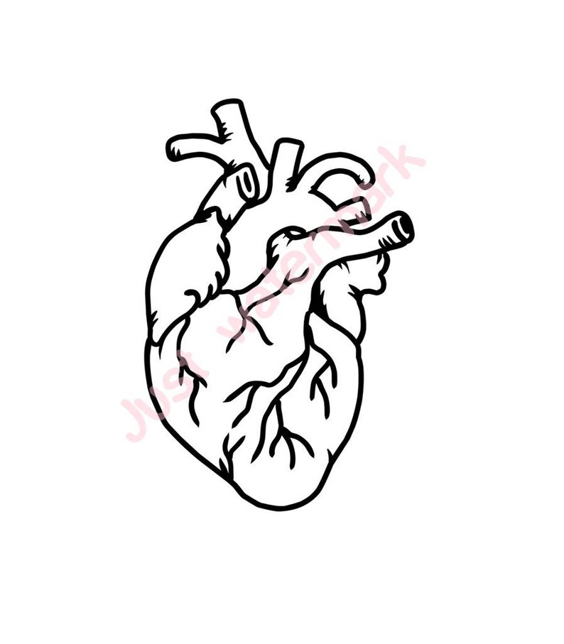 794x907 Human Heart Line Drawing Jpgsvg Real Hand Drawing For Etsy