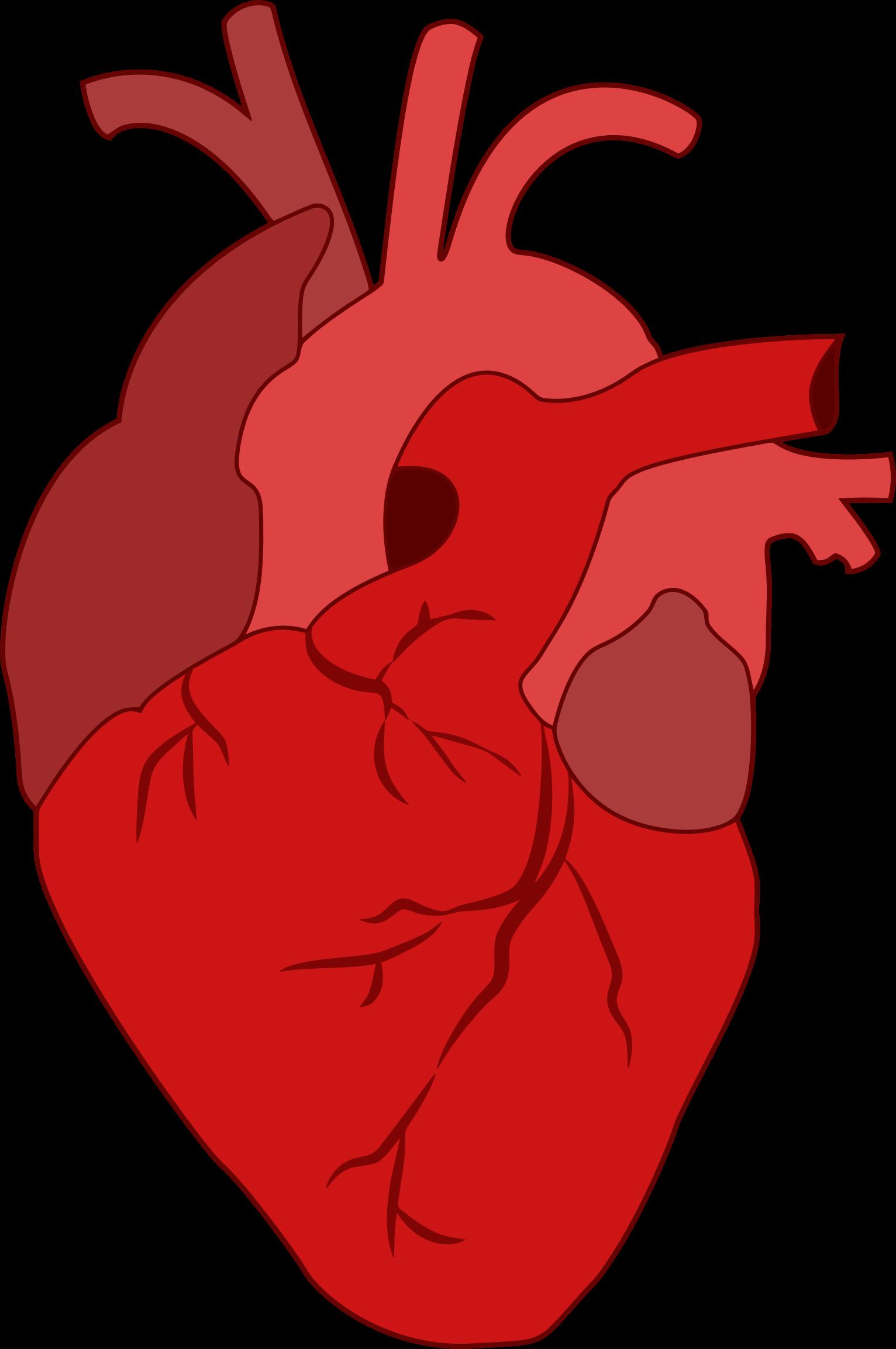Heart Real Drawing