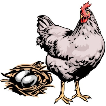 368x368 Vector Drawing Hen Free Vector Download