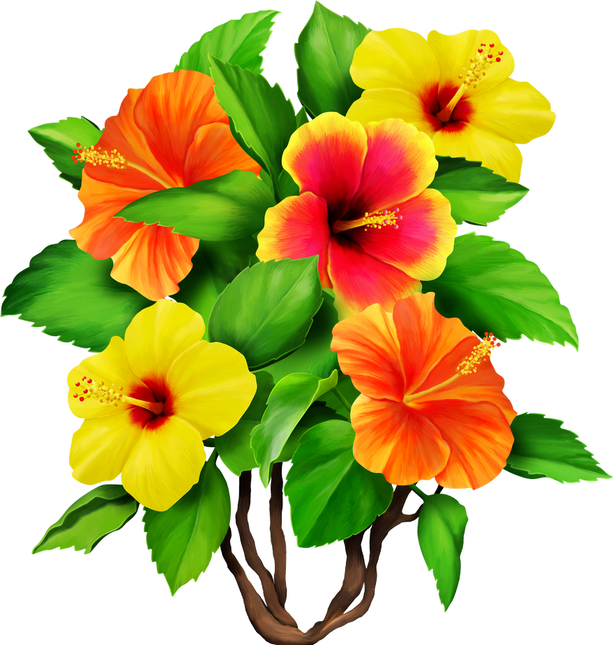 879x925 Colored Drawing Hibiscus Transparent Png Clipart Free Download
