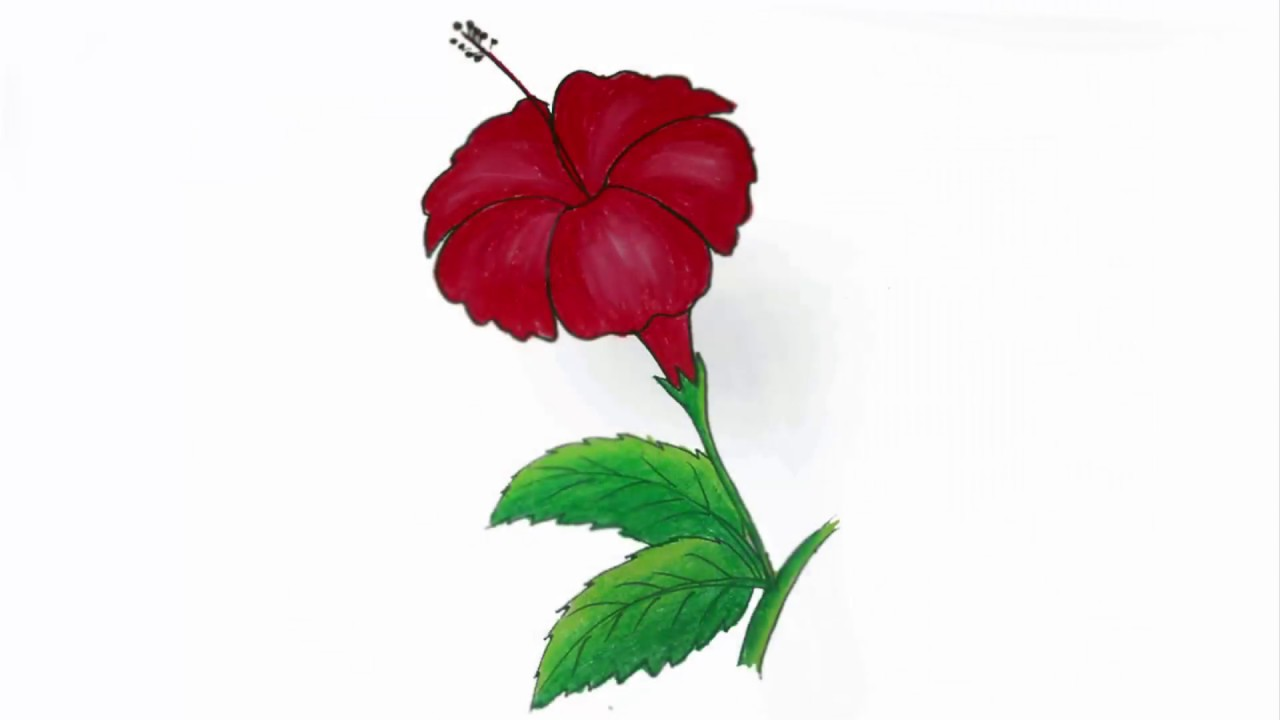 1280x720 How To Draw A China Rose Step