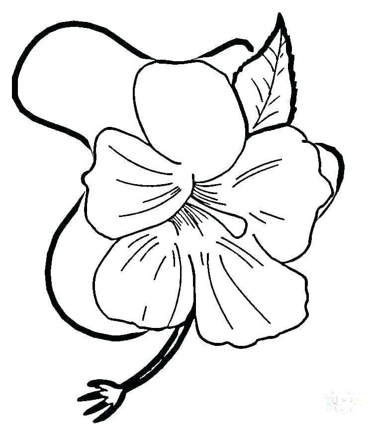 750x852 Simple Hibiscus Drawing Appealing Simple Hibiscus Flower Drawing