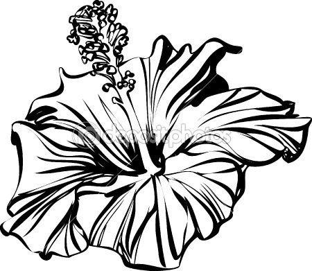 450x391 Hibiscus Outline Art In Hibiscus Drawing, Rose Line Art