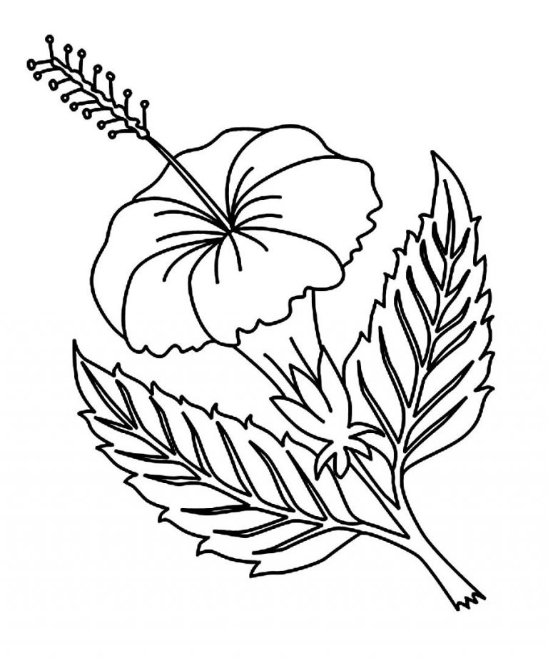 768x922 Drawing Coloring Picture Of Hibiscus Flower Online Coloring Pages