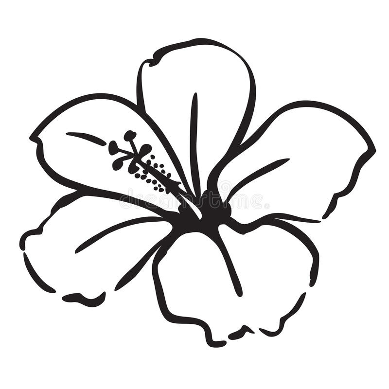 800x800 Collection Of Free Hibiscus Clipart Drawing Amusement Clipart