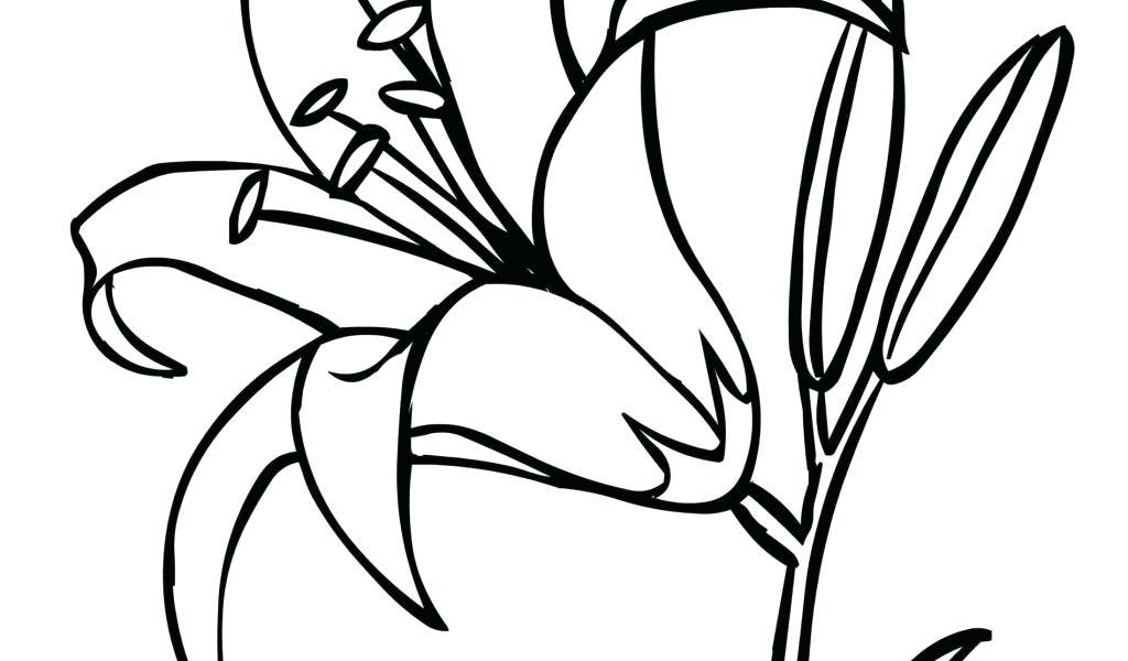 1024x600 Flower Drawing Outline Rose Flowers Draft Sketch Outline Hand
