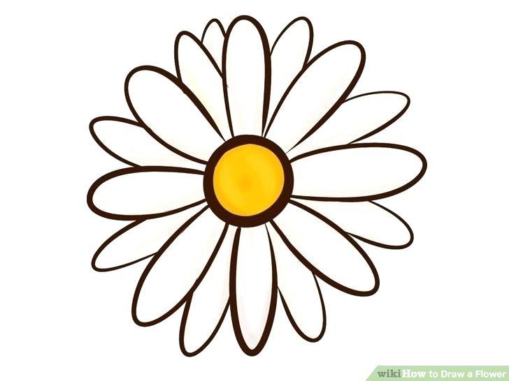 728x546 Flower Sketch Tutorial Hibiscus Flowers Drawing Tutorial Flower