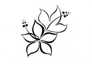300x210 Hawaiian Flower Drawing Hawaiian Flower Drawing Hibiscus Flower